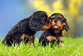 PUP 10 PE0007 01
