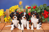 PUP 10 PE0013 01
