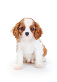PUP 10 PE0019 01