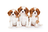 PUP 10 PE0020 01