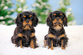 PUP 10 PE0024 01