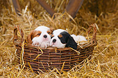 PUP 10 PE0027 01