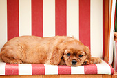 PUP 10 PE0034 01