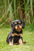PUP 10 PE0035 01