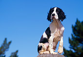 PUP 10 RK0066 01