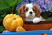 PUP 10 SJ0002 01
