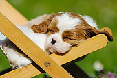 PUP 10 SS0005 01