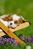 PUP 10 SS0006 01