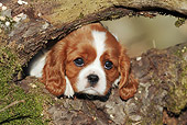PUP 10 SS0013 01