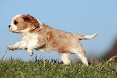 PUP 10 SS0014 01