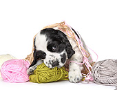 PUP 10 XA0001 01