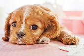 PUP 10 YT0010 01