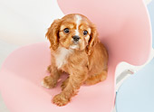 PUP 10 YT0011 01
