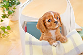 PUP 10 YT0012 01