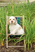 PUP 10 CE0001 01