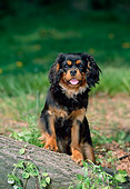 PUP 10 CE0003 02