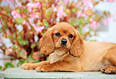 PUP 10 CE0004 01