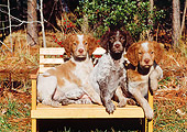 PUP 10 CE0014 01