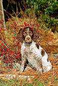 PUP 10 CE0015 01