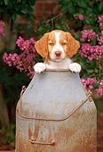 PUP 10 CE0017 01