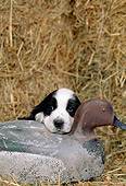PUP 10 CE0020 01