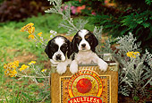 PUP 10 CE0021 01