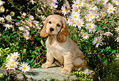 PUP 10 CE0028 01