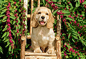 PUP 10 CE0030 01