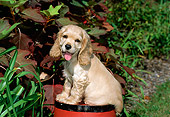 PUP 10 CE0031 01