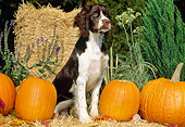 PUP 10 CE0036 01