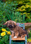 PUP 10 CE0039 01