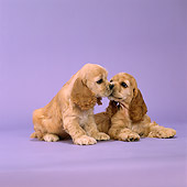 PUP 10 DC0018 01