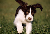PUP 10 GR0001 06
