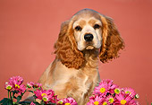 PUP 10 GR0014 02