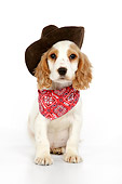 PUP 10 JD0004 01