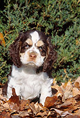 PUP 10 LS0002 01