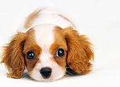 PUP 10 MR0004 01