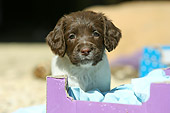 PUP 10 NR0004 01