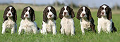 PUP 10 NR0007 01