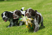 PUP 10 NR0016 01