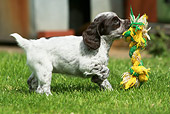 PUP 10 NR0017 01