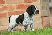 PUP 10 NR0020 01
