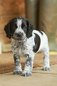 PUP 10 NR0021 01