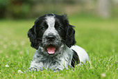 PUP 10 NR0022 01
