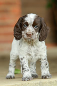 PUP 10 NR0025 01