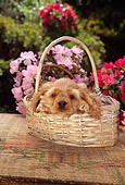 PUP 10 RC0002 01