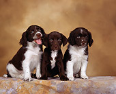 PUP 10 RK0004 02