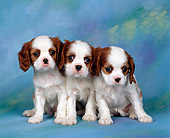 PUP 10 RK0013 07