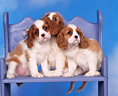 PUP 10 RK0021 03