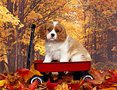 PUP 10 RK0029 04